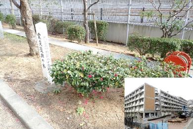 科学技術高等学校【震災復興の木】