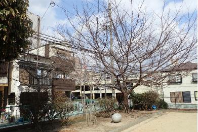 筒井公園【桜植樹・記念碑】