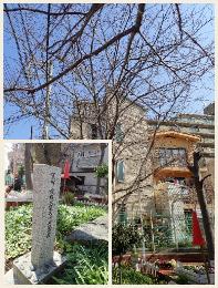 本庄町公園【桜の植樹】