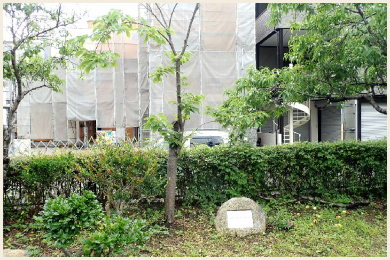 御旅公園内【復興記念植樹 桜】