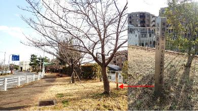 石屋川公園内【桜植樹・慰霊碑「生きた証」】
