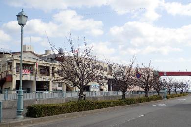 都賀川【桜の植樹】